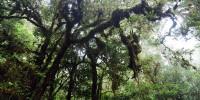 Hutan Hujan Tropis Sulawesi