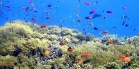 Penghuni perairan dangkal Sulawesi