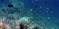 keindahan laut bunaken sulawesi