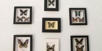 museum kupu kupu bantimurung