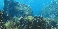 terumbu perairan dangkal