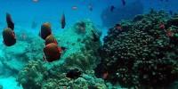 warna cerah penghuni laut