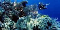 Menyelam di Taman Laut Wakatobi
