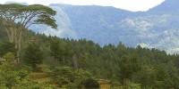 Wisata Hutan Di Kawasan Malino
